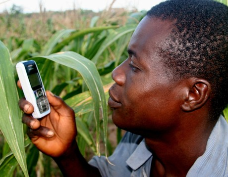 mobile phone in agriculture